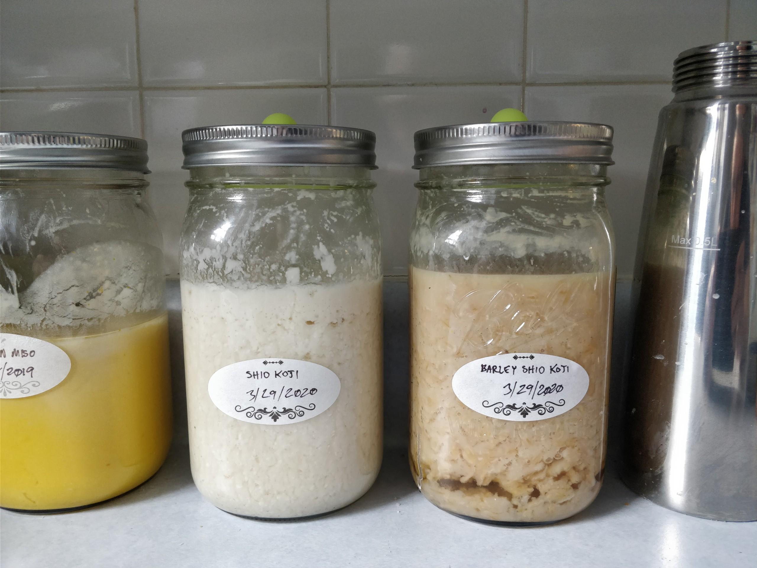 "two mason jars side by side, one labeled ""siho koji"" and the other ""barley shio koji"""